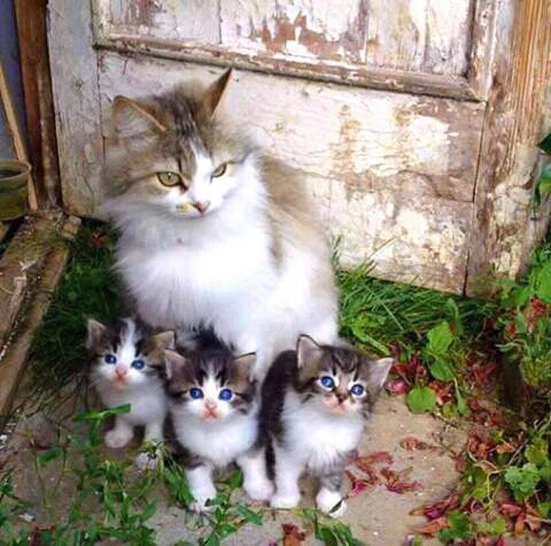ssscat cat training aid video