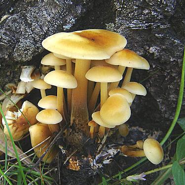 можно ли собирать замороженные грибы