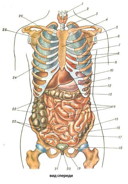 Как долго сохраняются боли после эндопротезирования коленного сустава