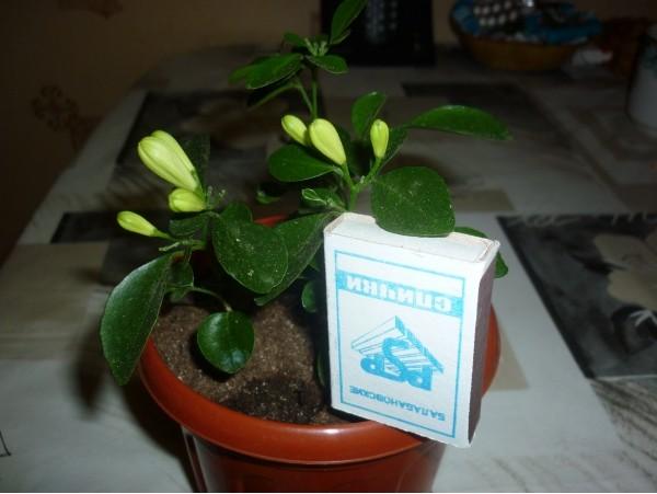 Выращиваем экзотические растения 741