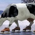 заниматься корова на льду фото кирби вызывает