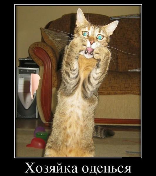 cat spraying blood