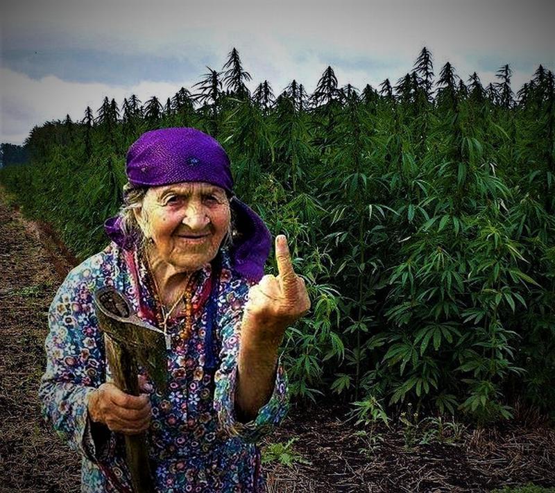 Картинки прикольные с марихуаной