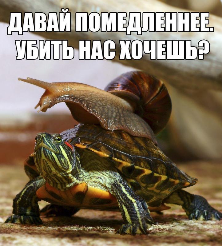 Красноухая черепаха издает странные