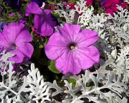 Ответы@mail.ru: какие цветы можно посадить на балконе с севе.