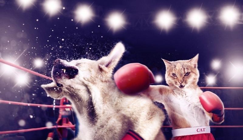 искать, картинки кошки с битами популярностью обязан