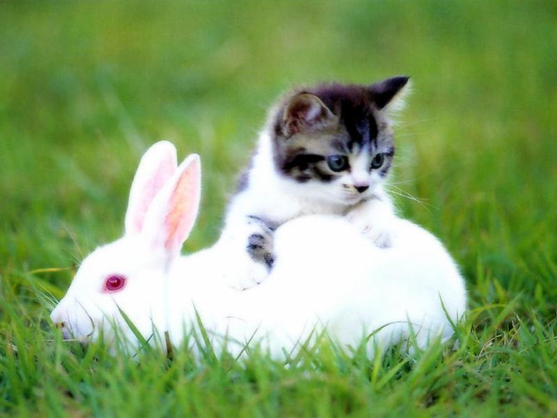 зайчики картинки с кошками свойства зеленого