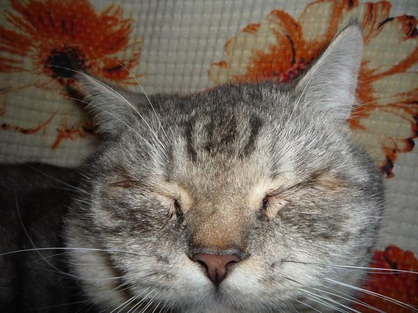 У кота из одного глаза течет что-то коричневое