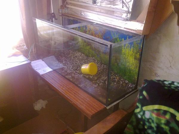 как сделать воду в аквариуме прозрачной ответ Татьяна Мудрец