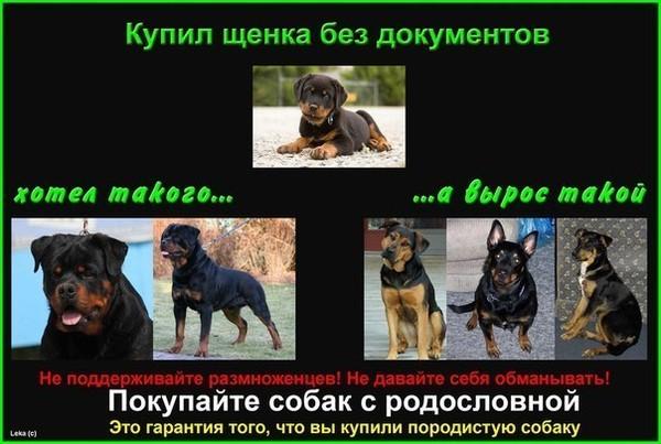 какое образование должно быть у заводчика собак