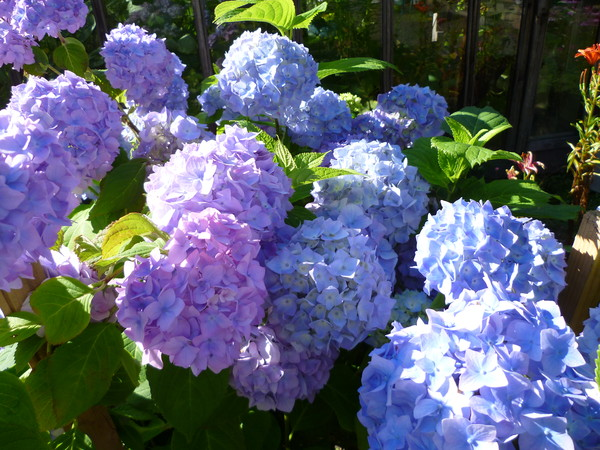 Цветы уличные цветущие