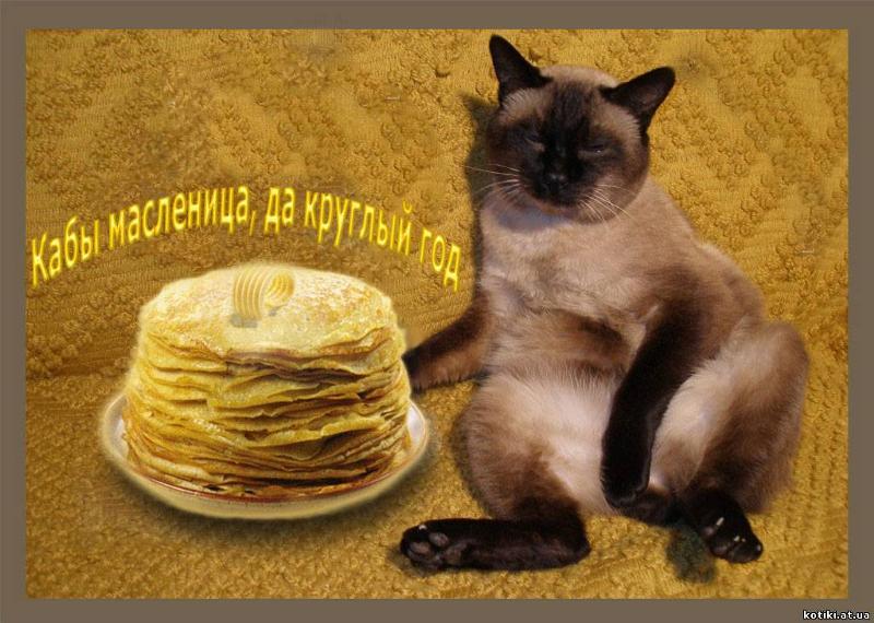 Кот и масленица картинки