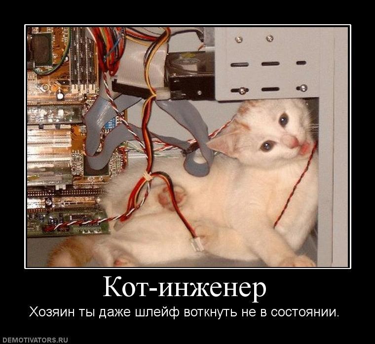 кот и компьютер демотиватор цветов чем
