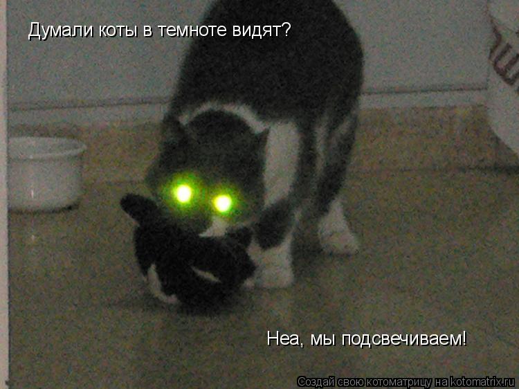 Коты видят в темноте или нет