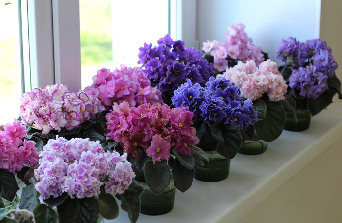 Какие цветы комнатные любят солнце