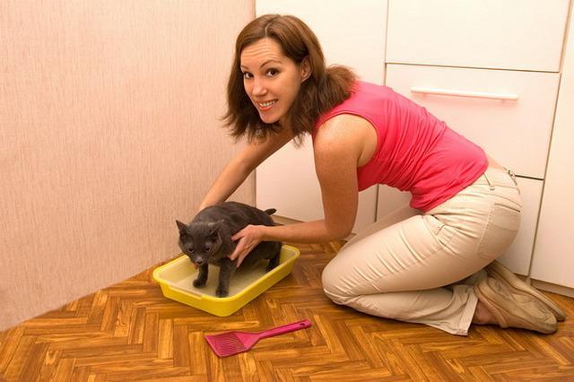 Teaching cat use toilet