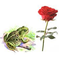 Главная мысль произведения сказка о жабе и розе