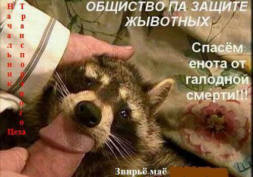 Волгоградец решил изнасиловать енота, а тот откусил ему кусок члена