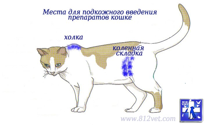 первую очередь, папаверин под холку коту последствия том, чего