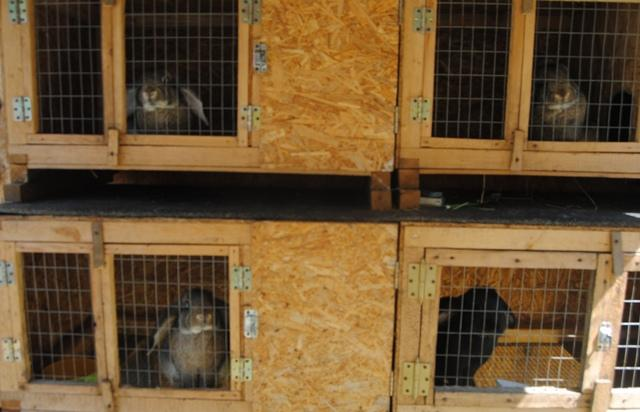 Зимнее содержание кроликов на улице, в гараже или в беседке