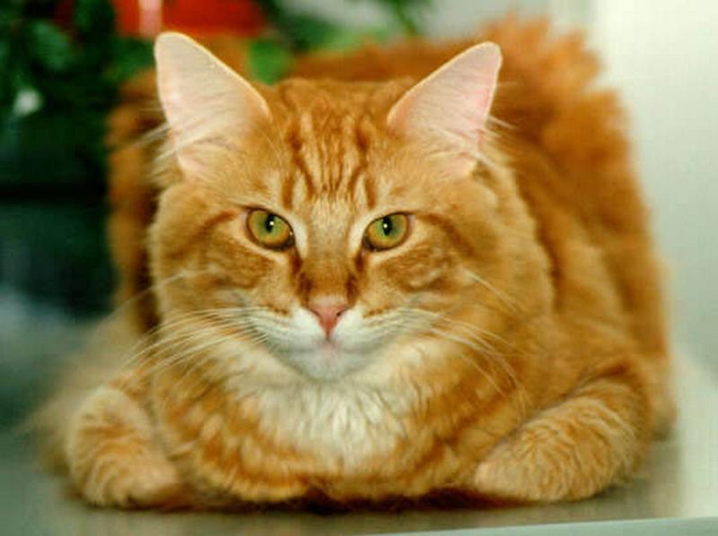 Рассказ о кошке на английском языке для 3 класса
