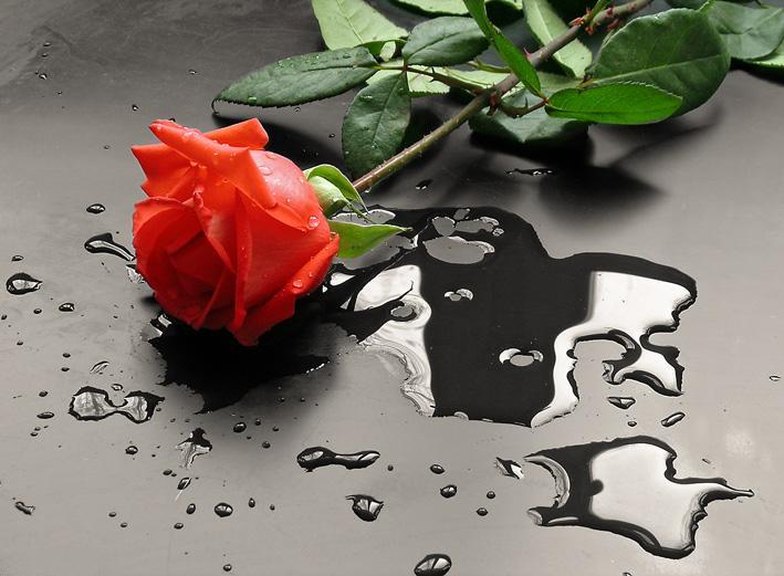 зависимости красивая картинка с цветком и слезой помощи