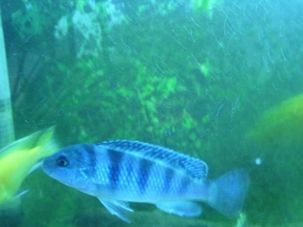 10 лучших рыбок для начинающих аквариумистов