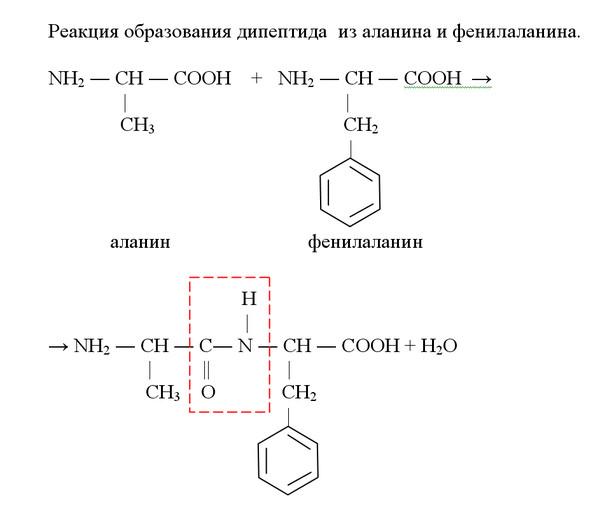 образования дипептида из