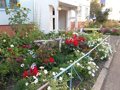 Цветы для теневой стороны дома