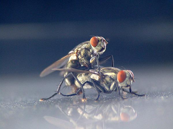 ебутся ли мухи ради удовольствия