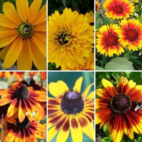 Цветы как подсолнухи название