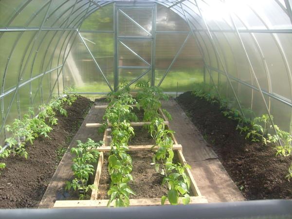 Вырасти сад!