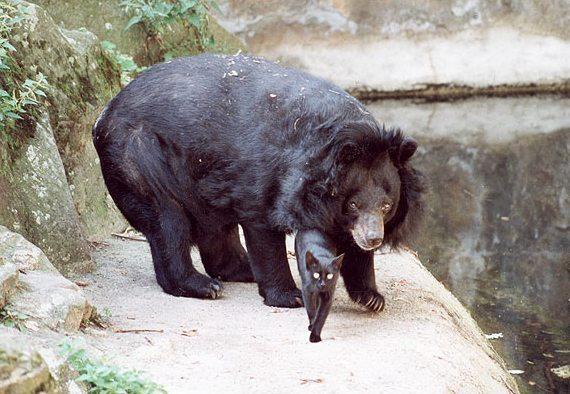 данное видео фото медведя и кошки раннее