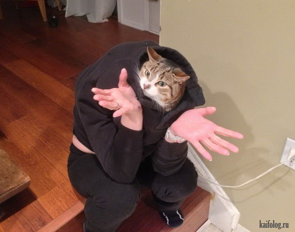 cat flushing toilet gif
