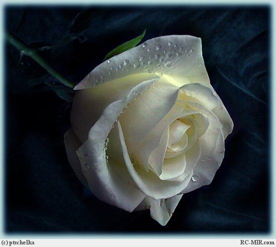Грустный цветок
