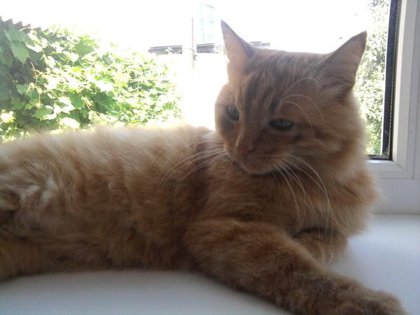 Какой антибиотик можно давать кошкам антибиотик для кошек ...