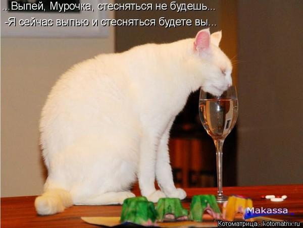 Предлагаю выпить картинки