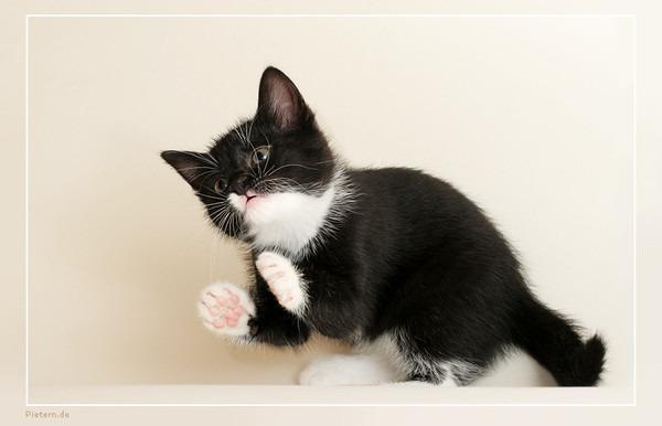 котенок хочет в коридор картинки Сказочный дуб