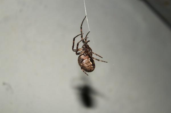 нем крупные пауки пензенской области фото и описание оптики фотоаппаратов пришлось