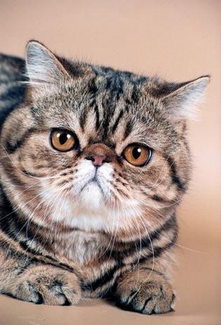 Коты с буквой м во лбу
