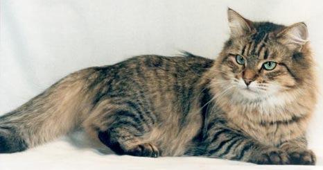 Что означает буква м у котов