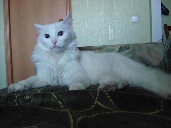 russkiy-kiski