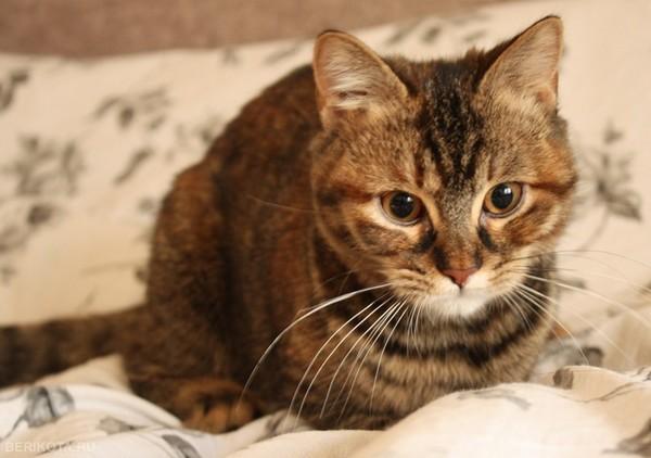 про клещей котята с карими глазами фото сожалению, российской истории