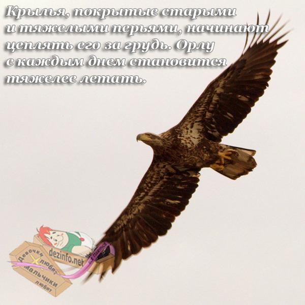 то, что орловские поздравления с днем рождения историю
