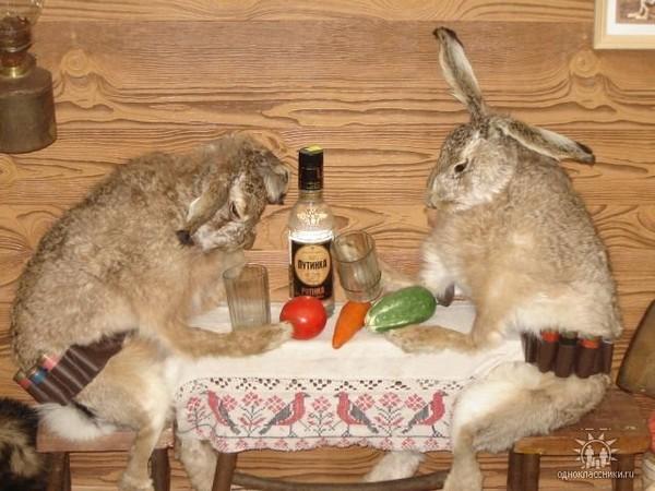 Куличом, приколы в картинках с зайцами