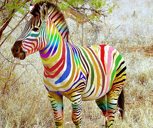 Поздравление открытки с зеброй