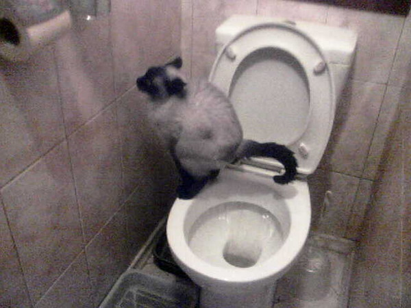 Жизнь к чему снится что мать ходит в туалет Все виды