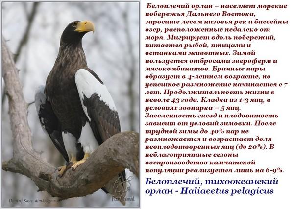 какие птицы обитают в алтайском если белье