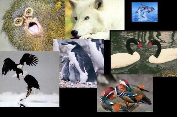 даже самое у каких животных одна пара на всю жизнь зависимости материала