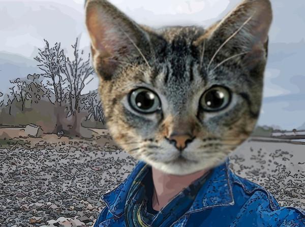 Кот вместо фото